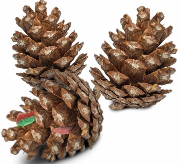 Back Zoo Nature Foraging Pine Cone - 6 stuks