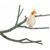 Back Zoo Nature Corky Branch Medium ca. 30-50 cm